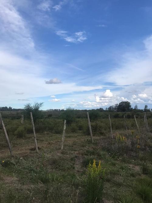 Campos y Chacras en Venta en Los Arrayanes, Soriano
