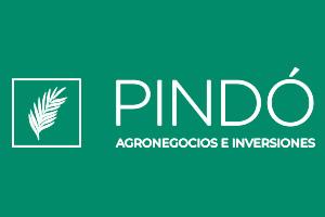 Pindó