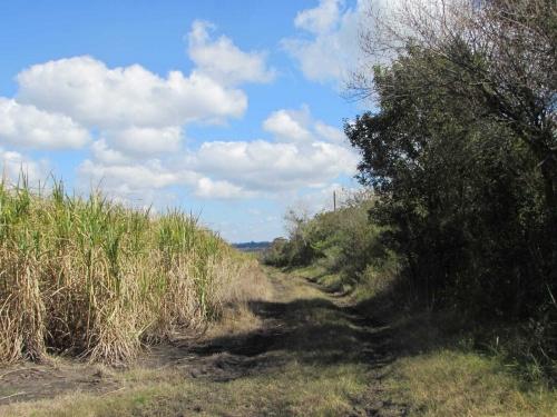 Campo / Chacra en Venta en Bella Unión, Artigas