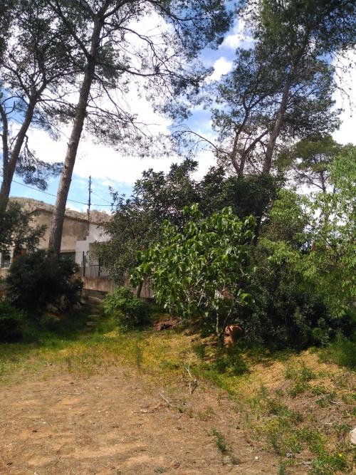 Casetas y chalets en Venta en Barraca De Aguas Vivas, Comunidad Valenciana