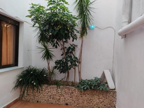 Casas y adosados en Venta en Barraca De Aguas Vivas, Comunidad Valenciana