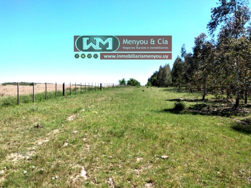 Campos y Chacras en Venta en Castillos, próximo a ruta 55, Otras localidades, Soriano