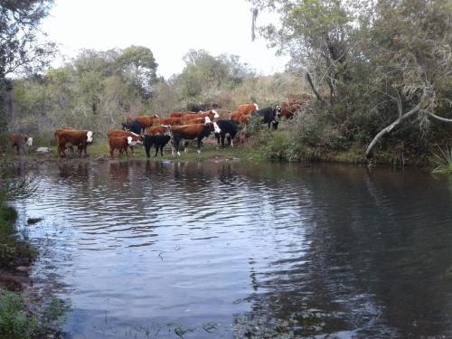 Campo / Chacra en Venta en Puntas Del Parao, Treinta y Tres
