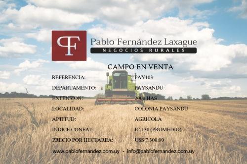 Campo / Chacra en Venta en Colonia Paysandú, Paysandú