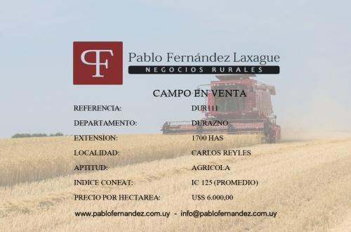 Campo / Chacra en Venta en Carlos Reyles, Durazno