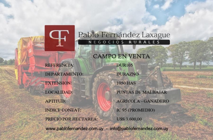 DURAZNO 1050 HAS - AGRICOLA / GANADERO