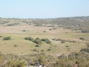 Campo / Chacra en Venta en Cerro Pelado, Lavalleja