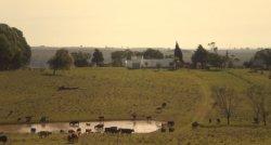 Campo / Chacra en Venta en Fraile Muerto, Cerro Largo