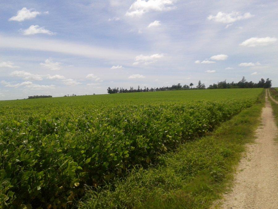 Excelente campo agrícola(Ref  239).